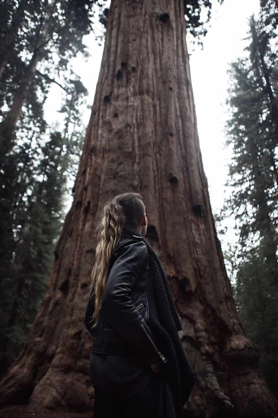 SN_05_HowITravel_Sequoia