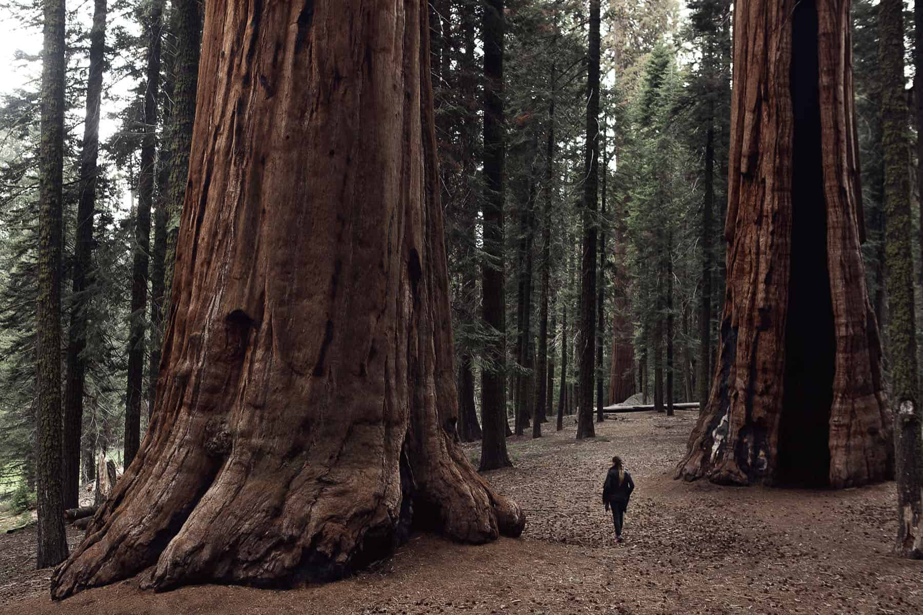SN_07_HowITravel_Sequoia