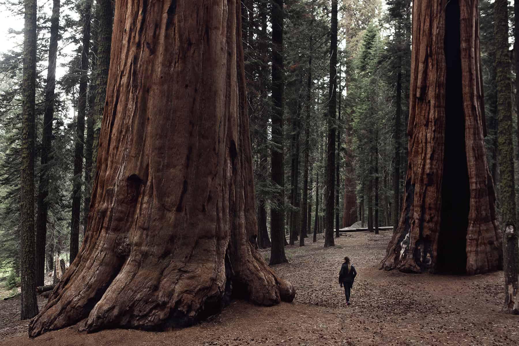 SN_07_HowITravel_Sequoia